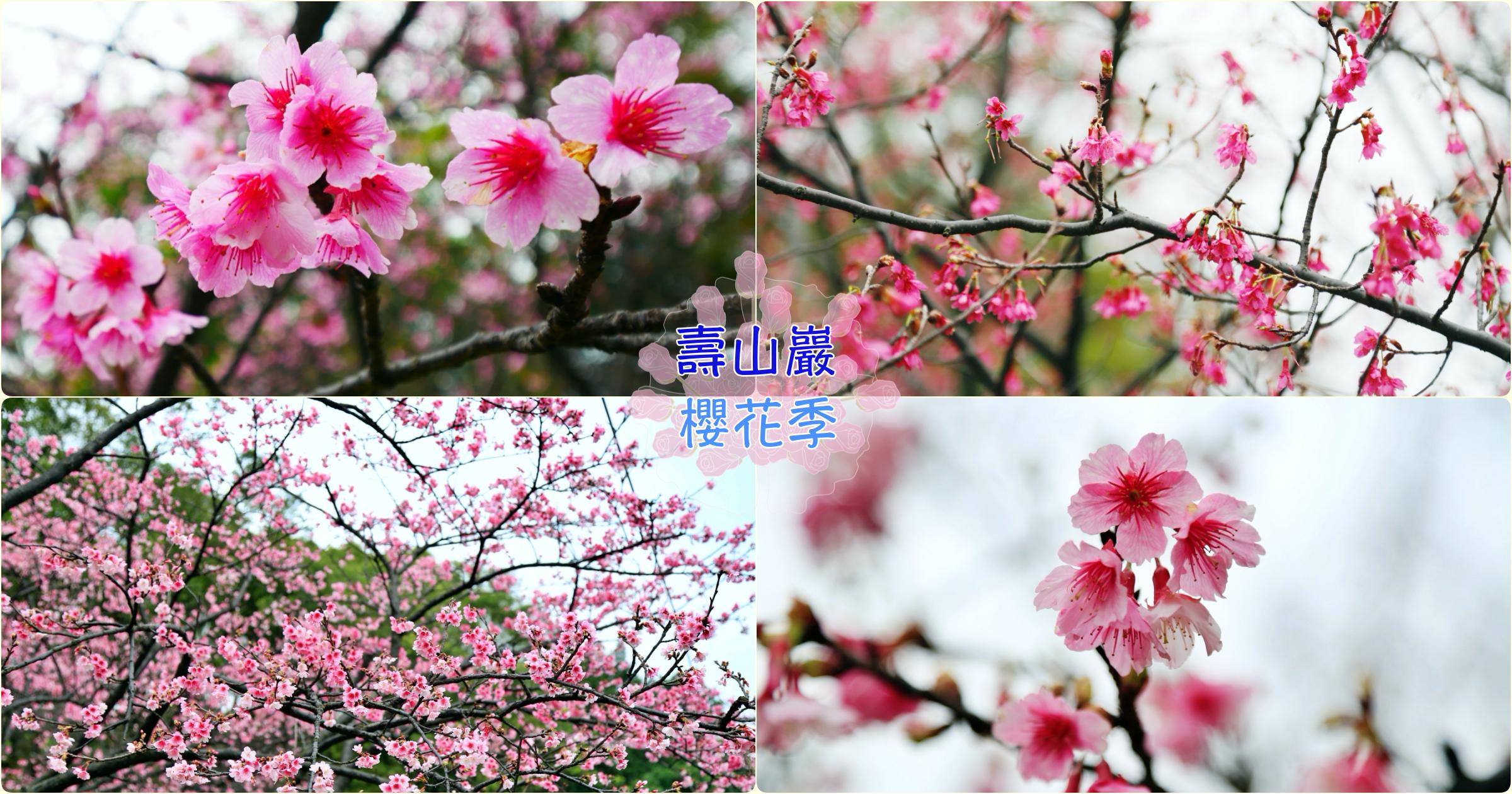最新推播訊息:[龜山旅遊]壽山巖觀音寺.壽山櫻花園 桃園市區附近最大片櫻花園~免費景點.預計二月底盛開