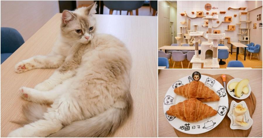 最新推播訊息:[桃園美食]喵日子café|向陽公園附近新開寵物餐廳.貓咪主題式咖啡館.無用餐時間限制免服務費下午茶