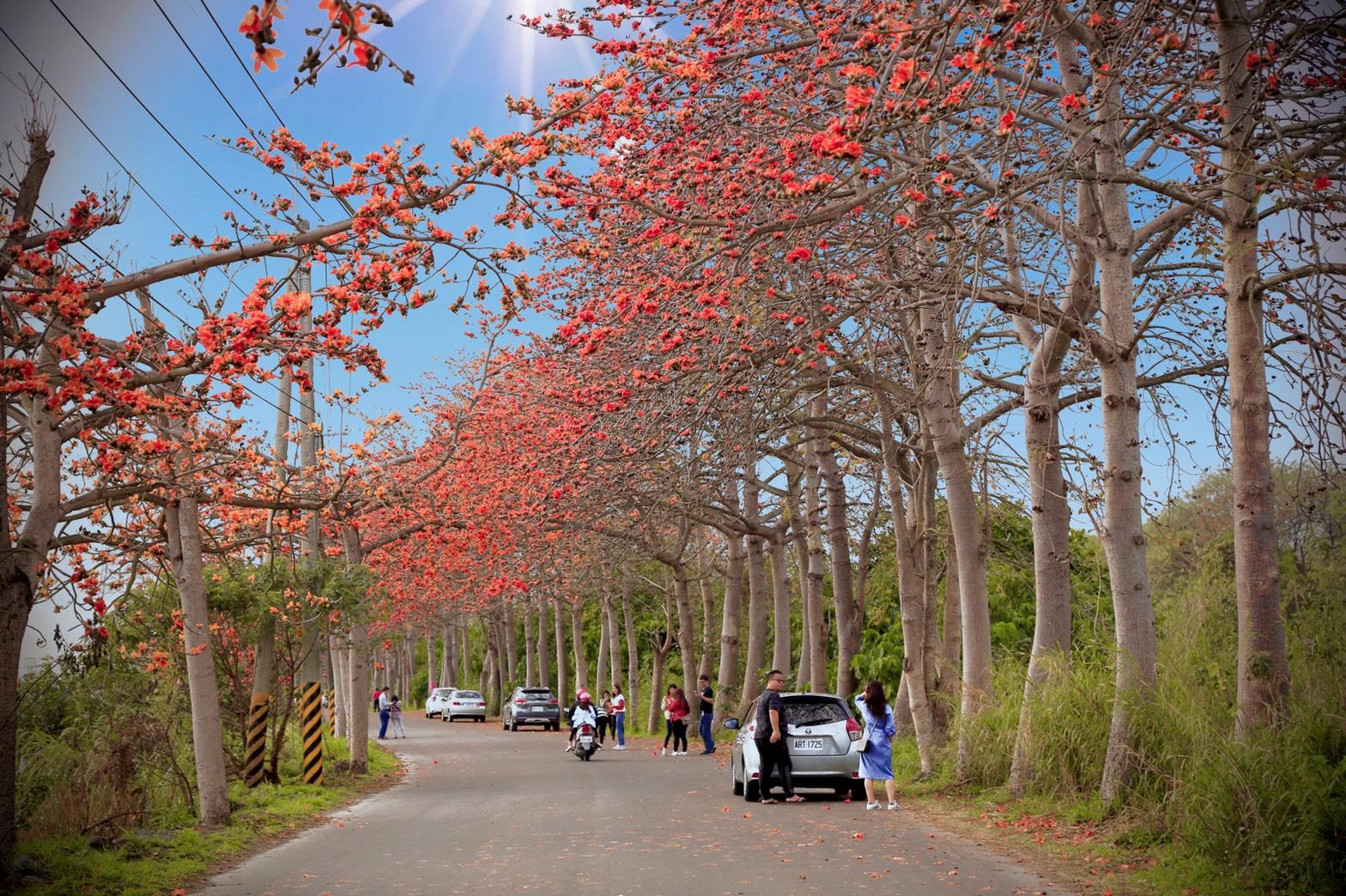 最新推播訊息:[彰化旅遊]東螺溪木棉花道|橘紅旋風來襲~台灣最長木棉花道.免費賞花景點